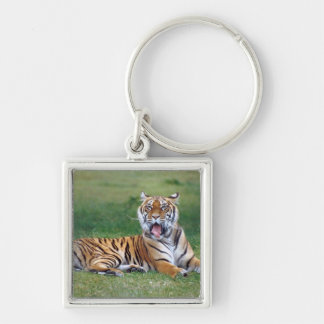 Yawning Tiger Keychain