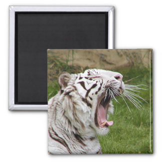 yawning tiger fridge magnets