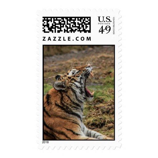 Yawning Tiger Postage Stamp Stamps