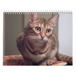 Year of the Bengal Cat Wall Calendar