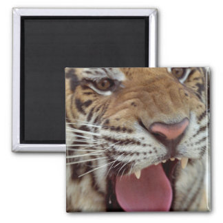 Year of the Tiger Square Magnet Fridge Magnets
