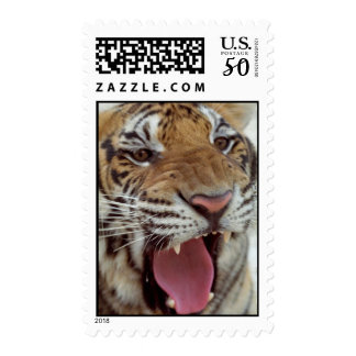 Year of Tiger Postage Stamp