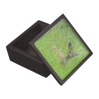 Yearling Deer in Meadow Premium Gift Box