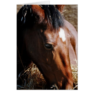 Yearling  Greeting Card