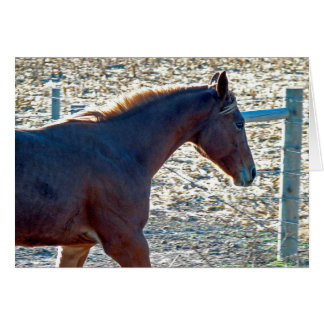 Yearling Horse, Birthday Greeting Cards