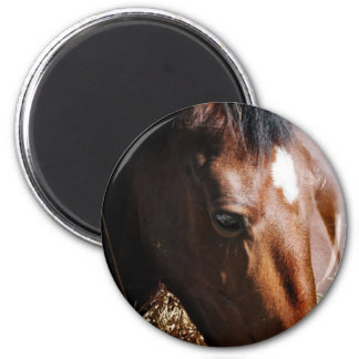 Yearling  Magnet Refrigerator Magnets