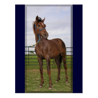 Yearling Postcards