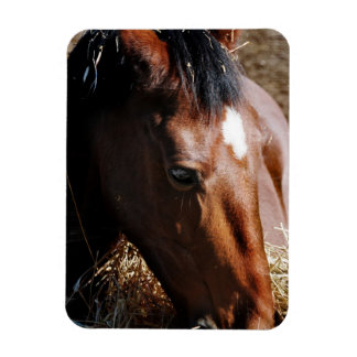 Yearling  Premium Magnet Rectangle Magnet