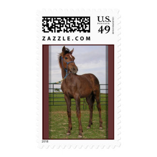 Yearling Stamps