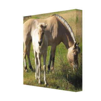 Yearling Wrapped Canvas