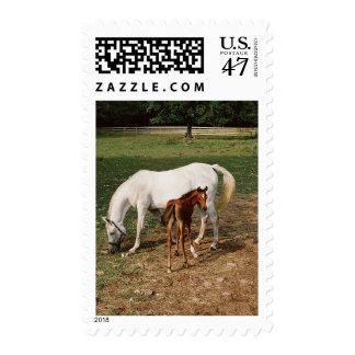 Yegua blanca con el potro de la castaña sello postal