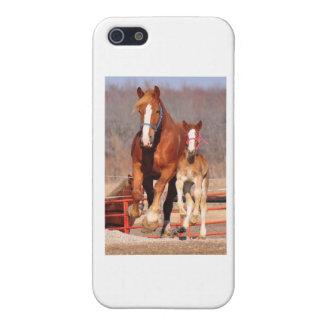 Yegua y potra iPhone 5 carcasa