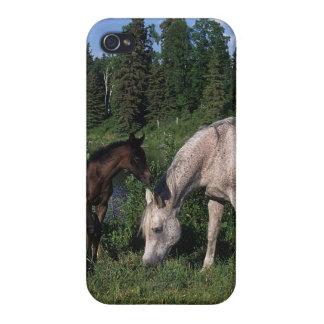 Yegua y potro árabes 2 iPhone 4 carcasa