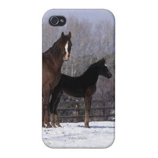 Yegua y potro árabes en nieve iPhone 4 fundas