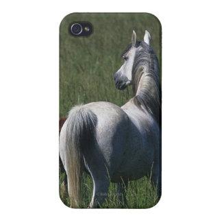 Yegua y potro árabes iPhone 4 funda
