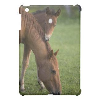 Yegua y potro cuartos americanos del caballo en