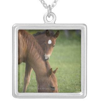 Yegua y potro cuartos americanos del caballo en ca joyerías