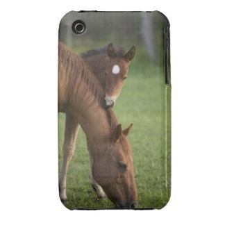Yegua y potro cuartos americanos del caballo en ca iPhone 3 Case-Mate carcasas