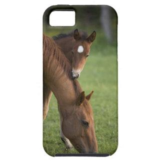 Yegua y potro cuartos americanos del caballo en funda para iPhone SE/5/5s