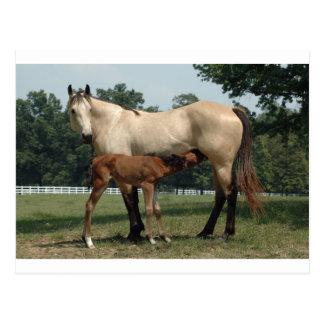 Yegua y potro cuartos del caballo postal