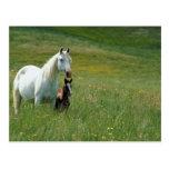 Yegua y potro en hierba alta tarjeta postal