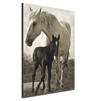 Yegua y potro impresión en lienzo estirada