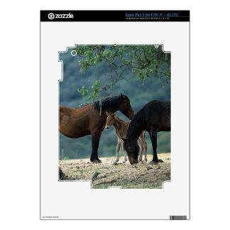 Yegua y potro salvajes del mustango iPad 3 skins