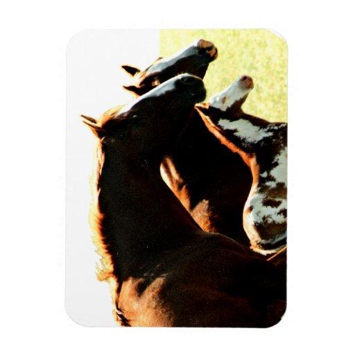 Yeguas y caballos asquerosos iman flexible