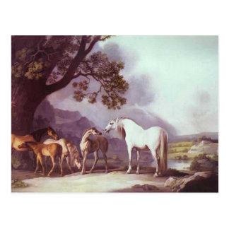 Yeguas y potros de George Stubbs- en un paisaje Tarjetas Postales