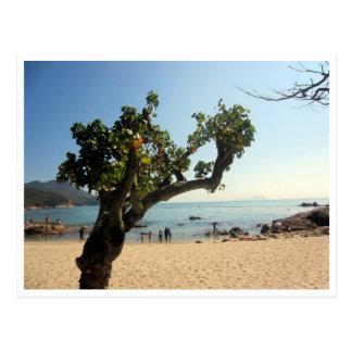 yeh árbol shing colgado de la playa postales