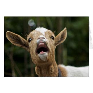 """""""Yelling Goat Yells for You"""" Card"""