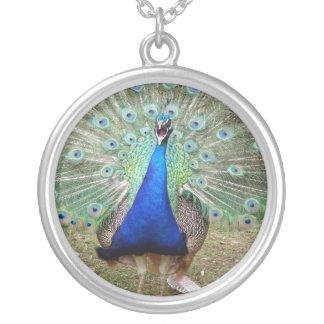 Yelling Peacock Jewelry