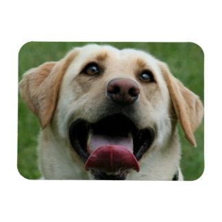 Yelllow Labrador Retriever Magnet