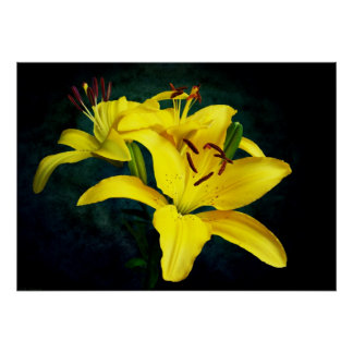 Yelllow Pixie Lilies on Blue Poster
