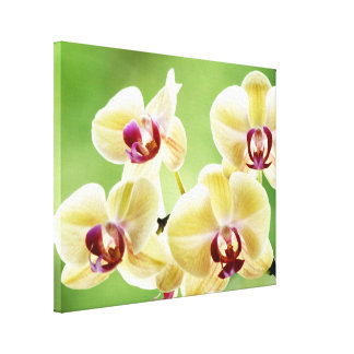 Yello and Pink Orchids Canvas Print