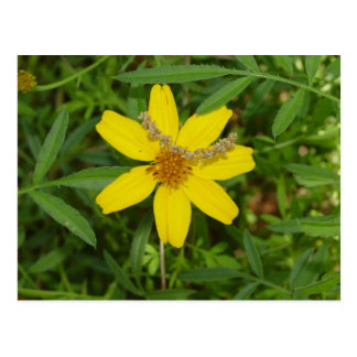 Yello Flower Postcard