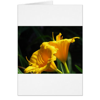 Yello Lillies Card