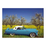 yellow 57 T-Bird flowers Announcements