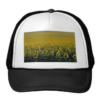 yellow A sunflower field in Spain flowers Hats