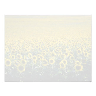 yellow A sunflower field in Spain flowers Letterhead