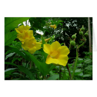Yellow Allamanda (Golden Trumpet) Card
