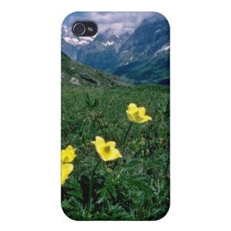 yellow Alpine pasqueflower flowers iPhone 4 Cases