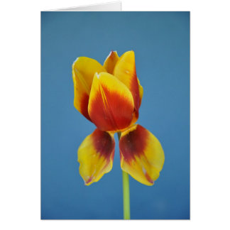 Yellow and 0range single tulip. card