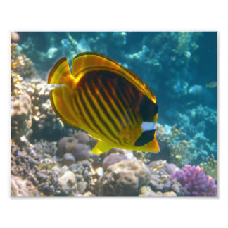 Yellow and Black Angel Fish Art Photo