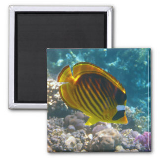 Yellow and Black Angel Fish Refrigerator Magnet