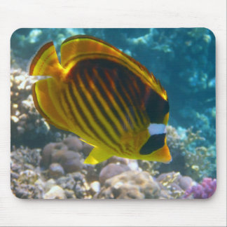 Yellow and Black Angel Fish Mouse Pad