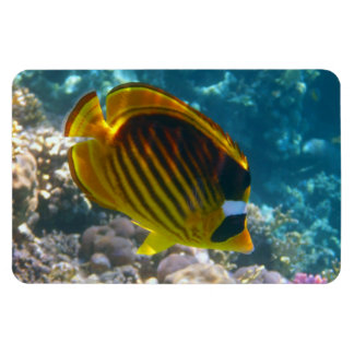 Yellow and Black Angel Fish Rectangular Magnets