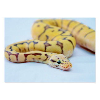 Yellow and Black Ball Python 2 Business Card Template