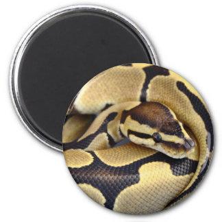 Yellow and Black Ball Python 3 Fridge Magnets