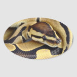 Yellow and Black Ball Python 3 Stickers